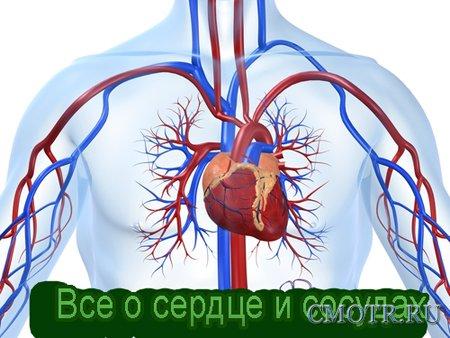 Все о сердце и сосудах лечение и профилактика заболеваний