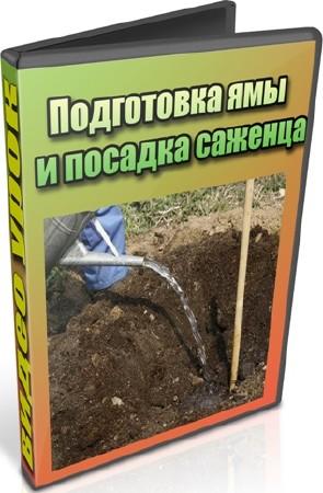 Подготовка ямы и посадка саженца (2012) DVDRip