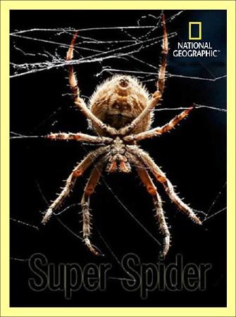 Супер паук / Super Spider (2012) SATRip