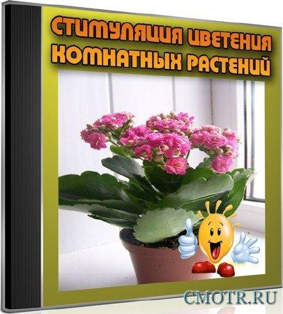 Стимуляция цветения комнатных растений (2013) DVDRip