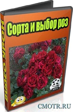 Сорта и выбор роз (2013) DVDRip