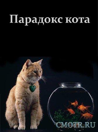 Парадокс кота (2013) SATRip