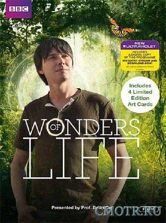 BBC: Чудеса жизни. Что есть жизнь? / BBC: Wonders of Life. What is life? (2013) HDTV
