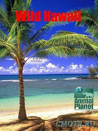 Невиданные Гавайи / Wild Hawaii (2013) DVB