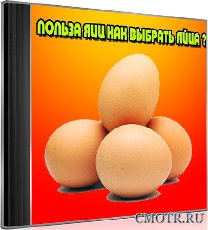 Польза яиц, как выбрать яйца (2013) DVDRip