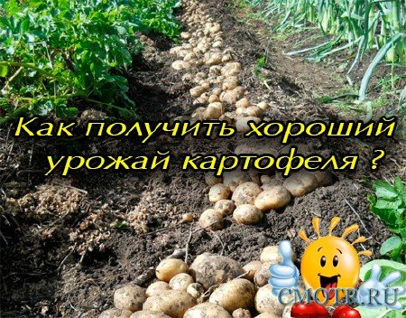 Как получить хороший урожай картофеля (2012) DVDRip
