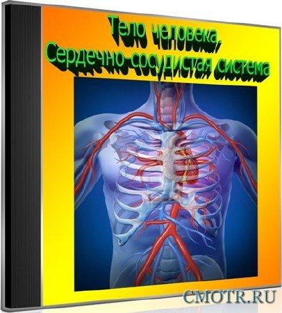 Тело человека. Сердечно-сосудистая система (2013) DVDRip