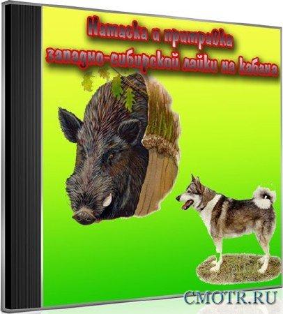 Натаска и притравка западно-сибирской лайки на кабана (2013) DVDRip