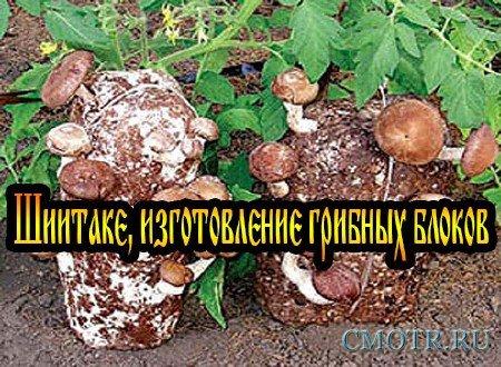 Шиитаке, изготовление грибных блоков (2013) DVDRip