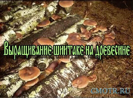 Выращивание шиитаке на древесине (2013) DVDRip