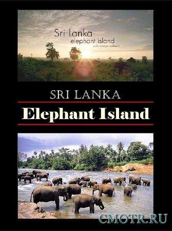 BBC: Шри-Ланка - Остров слонов / BBC: Sri Lanka - Elephant Island (2013) HDTVRip