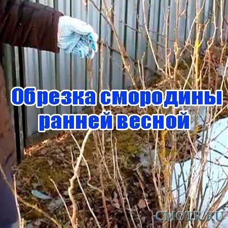 Обрезка смородины ранней весной (2013) DVDRip